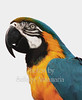ANIMALS : Big and small. Wildlife,pets,insects,butterflies,birds and fish